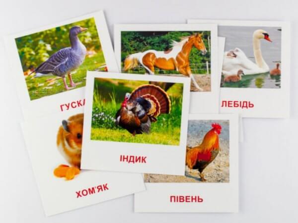 Свійські тварини. Картки міні з мобільним додатком