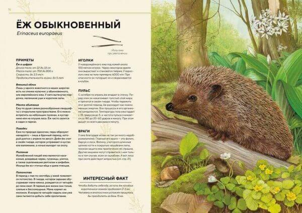 Лесные животные в натуральную величину