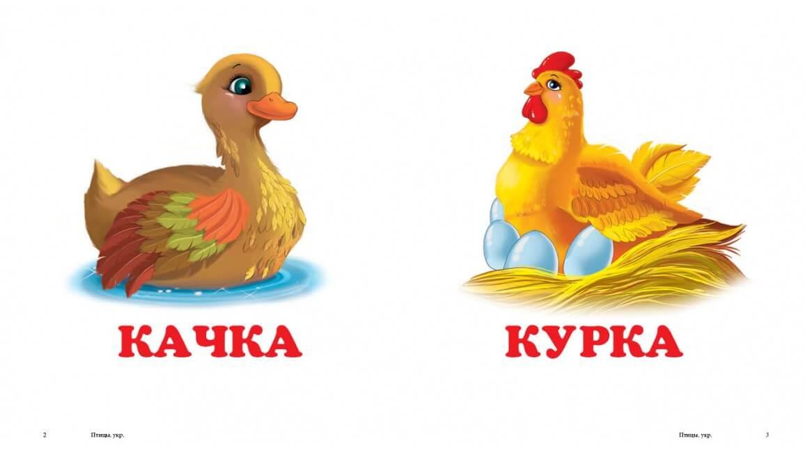 Книга Птахи. Книжка-малятко | Издательство Пегас | Balyuk